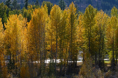 drama on the methow (Vida Morkunas (seawallrunner)) Tags: camping autumn lake hot cold fall beautiful yellow washington winthrop peaceful windy wa leafy arid pearrygin cwall highdesertplains bloodycoldatnightat7f dayswereniceandwarmthough