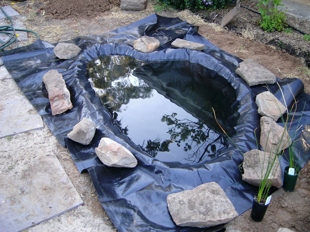 The world 39 s best photos by metanoia cw flickr hive mind for Blue koi pond liner