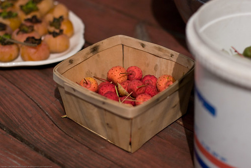 Edible Forest Gardens: cottonwood fruits, american persimmons