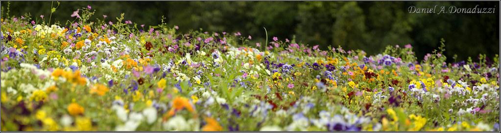 Panoramica Flores no Jardim Botânico