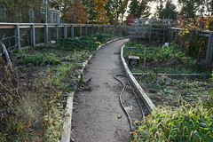 cambridge community garden