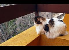 Enjoy The Silence (LinoPhilippe) Tags: chile santiago cats cat catwomen nikon kitten feline chat kitty gatos gato felino katze nikkor gatto katzen kot matou chatte chaton  d60  hauskatze  felidi 1855mmf3556gvr catnipaddicts