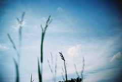 When The Wind Blows (RenaiShashin) Tags: 35mm lomo lca lomography singapore lomolca iso 100 normal process solaris compact automat kompact ferrania lomolcarl lcarl