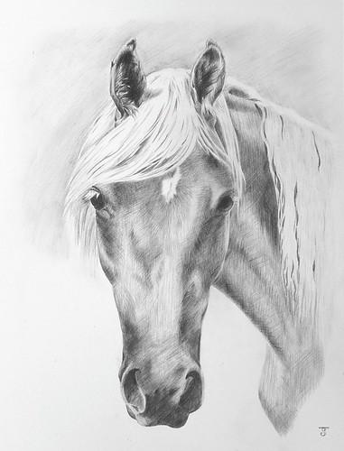horse drawings in pencil. Best horse drawings Pool