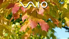 IMG_1259 (www.eddie-lawrance.co.uk) Tags: wallpaper vaio