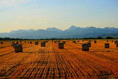 Estate / Summertime (Pisa, Tuscany, Italy) (AndreaPucci) Tags: italy field italia day farm farming clear pisa campagna tuscany hay bales toscana sole monti fieno canoneos400 canonefs1855mm3556 andreapucci
