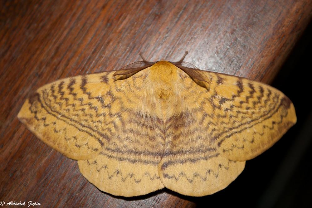 Batterfly!