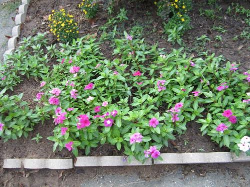 Khu vườn của Na - Page 5 5804493788_857364cf1a