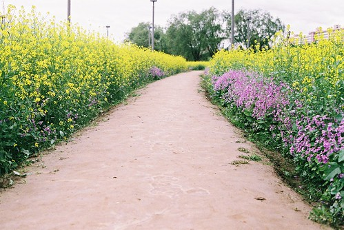 Pretty flower-lined path