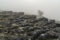 Limestone Pavement (l4ts) Tags: landscape derbyshire peakdistrict whitepeak upperdovevalley earlsterndale limestone limestonepavement clints grikes hindlowquarry geology frost mist