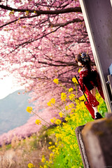 河津桜2 (Haku1923) Tags: dollfiedream doll dd dollfie mdd sakura