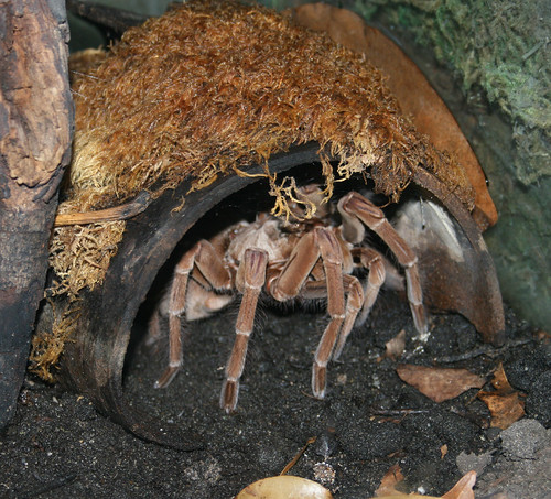 zoo spiders 2