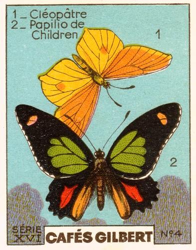 gilbertpapillons005