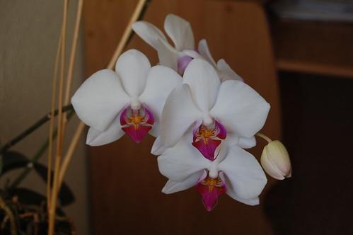 DSC_0415 Orquídeas