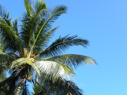 Sg Ayam | Coconut Palm Tree with Blue Sky