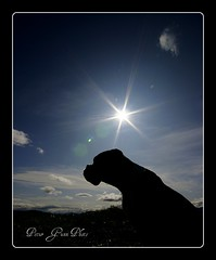 Boxer Star (Ptur Gunn Photograpphy) Tags: dog pet sun silhouette star photo iceland friend sony best alfa boxer 700 sland petur gunn ptur gunnarsson