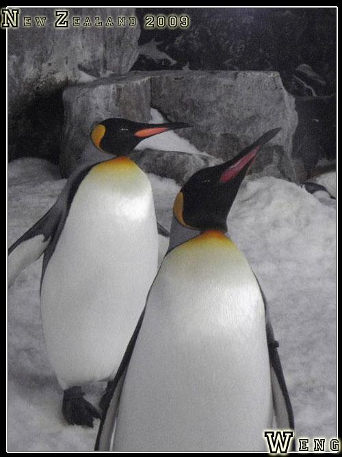 Auckland, Kelly Tarlton, Penguins
