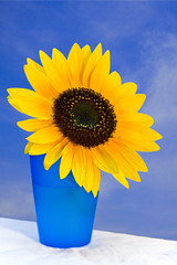 Blue Blue Sky...... (CaptainCool21) Tags: blue sky orange rot nature water yellow canon wasser flickr sonnenuntergang natur himmel gelb tisch blte sonne sonnenblume sonenblume 400d canoneos400d flickraward