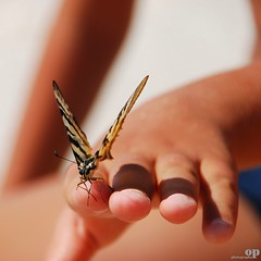 Croatian Butterfly (Osvaldo_Zoom) Tags: closeup composition butterfly kid bravo holidays poetry hand croatia exhibition trogir dalmazia photostounclimatechangeconferenceincopenhagen2009