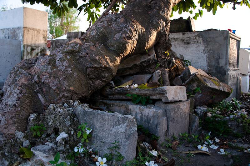 Дерево на могиле