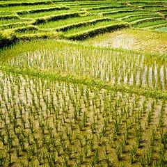 Bali_MFslidescans-6 (ervinelin) Tags: bali film indonesia landscape scans mamiya6 slides 2009 epsonv700