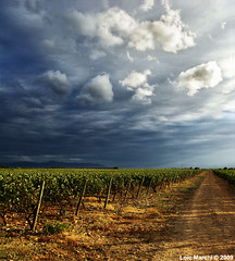 vignes corbieres (Icol81) Tags: the4elements abigfave anawesomeshot goldendiamondblog