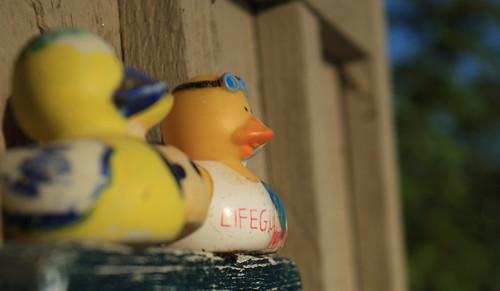 Lifeguard Ducky