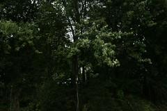 _MG_6530.JPG (zimbablade) Tags: trees sleepyhollow dougmiller videopoem