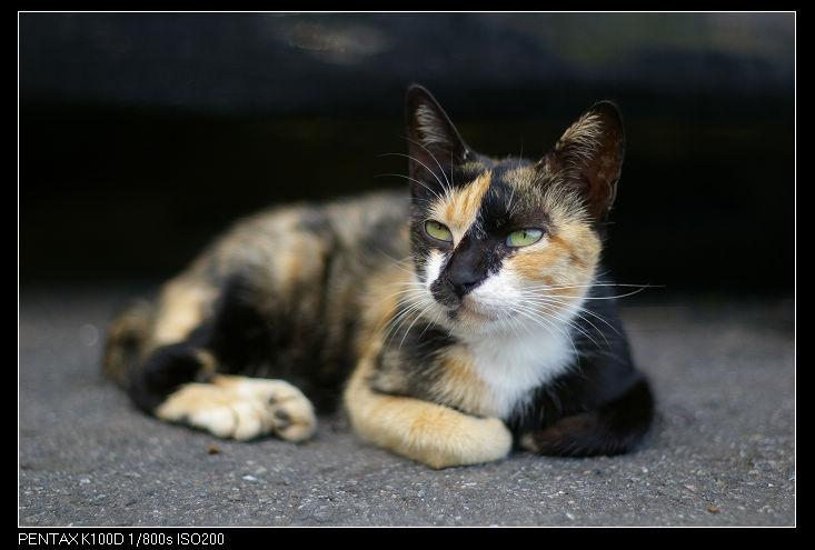黃金博物館街貓