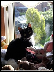 Cats 85 - Numpty Chicken loo