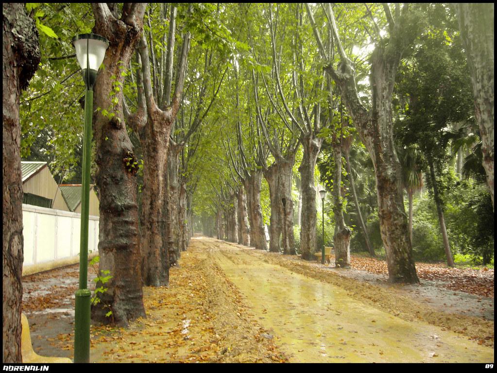 ❤ مبهجة من حديقة الحامة بالعاصمة ❤ 3995720030_0f984584d