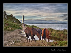 Cabalos en Cabo Home--  horses in Cape Home (eiras1) Tags: horses home cheval cabo flickr award plante cabohome cabalos distinguishedhdr