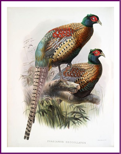 016-A monograph of the Phasianidae- D. J. Elliot 1872