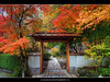 Autumn Colors at Portland Japanese Garden 3 (David Gn Photography) Tags: autumn oregon portland landscape fallcolors portlandjapanesegarden hdr washingtonpark japanesemapletree sigma1020mmf35exdchsm platinumpeaceaward canoneosrebelt1i