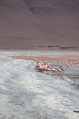 baudchon-baluchon-laguna-colorada-0481