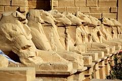 Avenue of Rams (p medved) Tags: temple egypt egipto karnak luxor gypten templo egitto egypte egito tempel egypten templom tempio tapnak hram egipt misr misir chrm tempelj templu egipat egyptus