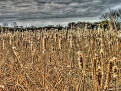 Approaching Storm (Jim_In_Plymouth) Tags: clouds plymouth cattails hdr timbershorespark