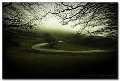 (CiuPix) Tags: autumn tree nature fog alberi digital canon dark eos italia searchthebest wind natura silence nebbia autunno umbria limbo faggio sigma1020mm montecucco ©allrightsreserved bej 400d ciupix p1f1 theperfectphotographer valdiranco coppercloudsilvernsun