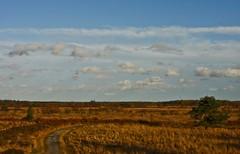 De grote Peel... (Truus) Tags: de herfst wolken margot marianne peel zon irma limburg wandeling grote truus astric