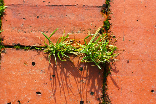 Grass Between Bricks