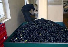 olives tremis