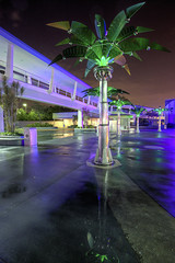 Palm Trees of Tomorrowland (Todd Hurley (Todd_H)) Tags: park longexposure nightphotography trip family light usa color reflection green art water night canon dark fun photography orlando lowlight neon florida magic wideangle disney retro disneyworld palmtree mickeymouse trashcans fullframe wdw waltdisneyworld tomorrowland hdr themepark magickingdom faketree waltdisney detailed orlandofl uwa wdi lakebuenavista 17mm rained canon1740f4l themagickingdom ultrawideangle baylake retrofuturistic waltdisneyworldresort lglass metaltree canoneos5dmarkii canon5dmkii canon5dmark2 5dmkii 5dm2 5dmark2 canon5dmarkii canon5dii canon5d2 canon5dm2 thhphotography toddhurley reflectionfromrainonpavement