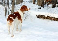 Presiding over her domain (Zombiebrainz) Tags: winter ontario december 2009 canon40d platinumheartaward