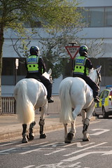 Essex Police Horses leaving Ipswich Police Station (Ian Press Photography) Tags: road old horses horse station football suffolk championship pc farm norfolk police mounted policewoman norwich match service emergency essex derby services ipswich policeman 999 portman wpc policing