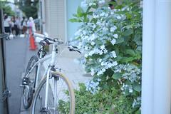 南青山 ∣ Minami Aoyama・Tokyo (Iyhon Chiu) Tags: flower 紫陽花 アジサイ 繡球花 あじさい flora hydrangea 南青山 aoyama omotesando 表参道 tokyo sunset japan japanese bike bicycle 自転車 單車 腳踏車 日本 東京 city 街 街景 street 2016