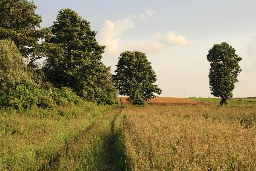 Suburbs / Kalisz - Szczypiorno