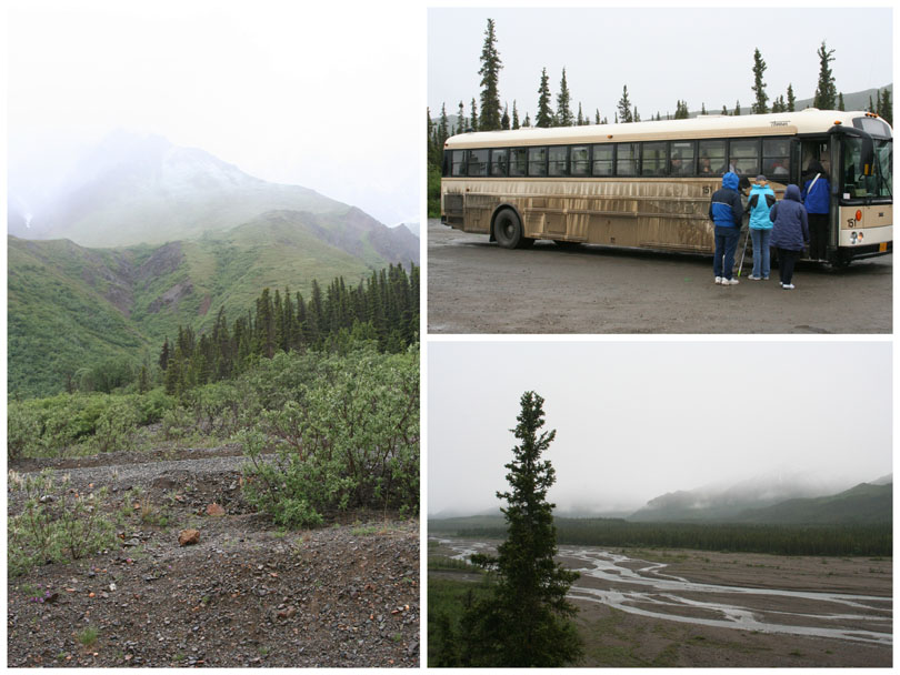 Denali Bus Tour 1
