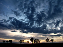 At the end of the day (RainerSchuetz) Tags: trees sunset sky cloud tree silhouette clouds day sundown cloudy distillery blueribbonwinner treerow sunbehindclouds abigfave anawesomeshot naturewatcher 100commentgroup