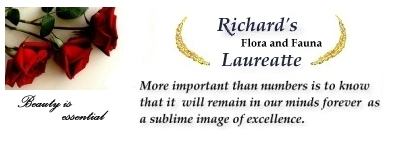 Richards Flora and Fauna lauareatte 2