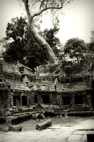 A Tree Grows Out From Preah Khan, Cambodia
